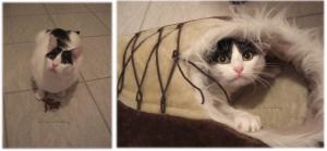 Unsere Katze Sam