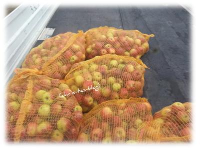 Äpfel in Säcke gefüllt