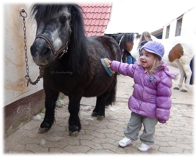 Virginia striegelt kleines Pony
