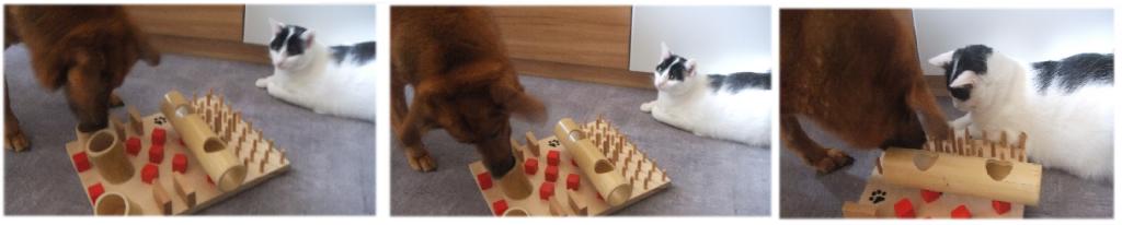 Auch Jacky interessiert sich für das Katzenfummelbrett