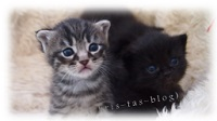 Unsere Main Coon-Mix Babys