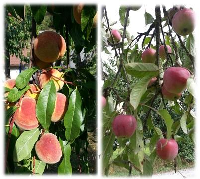 Pfirsiche und Äpfel in unserem Garten