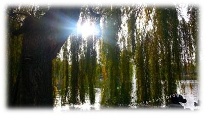 Sonne am Bleichweiher