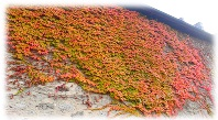 Herbstzauber 2015