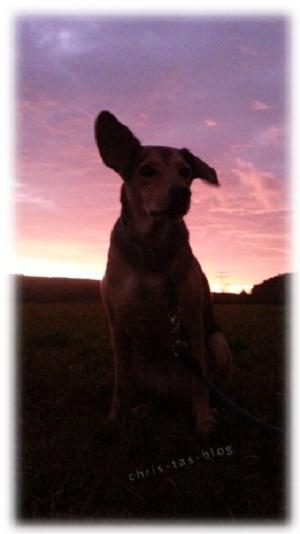Mandy im Sonnenuntergang