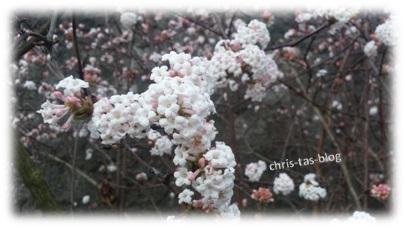 Blüten im Dezember 2015