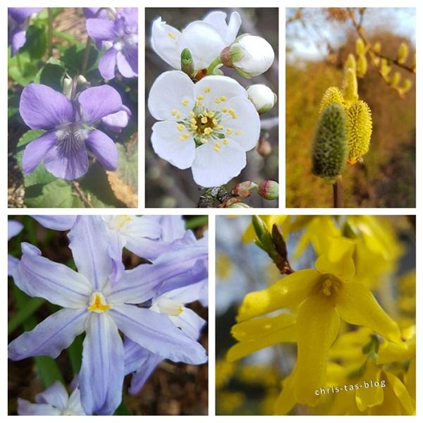 Natur erwacht Frühling 2016