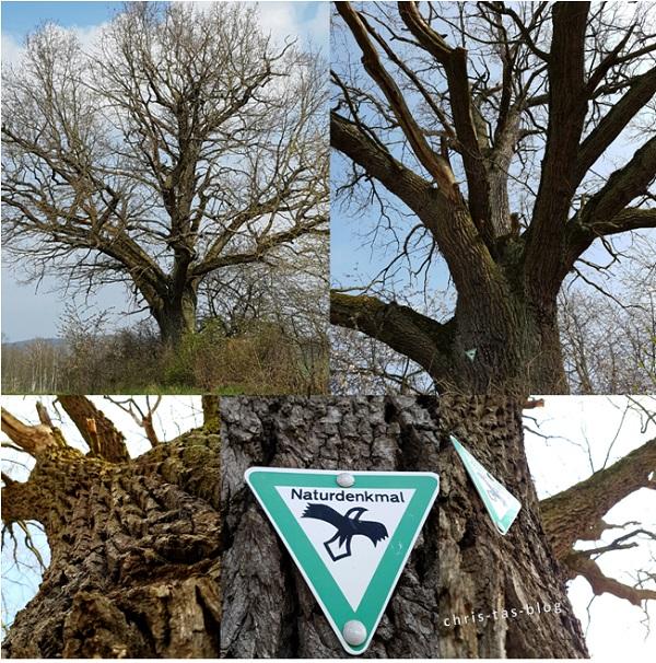 Naturenkmal Alte Eiche Ullstadt