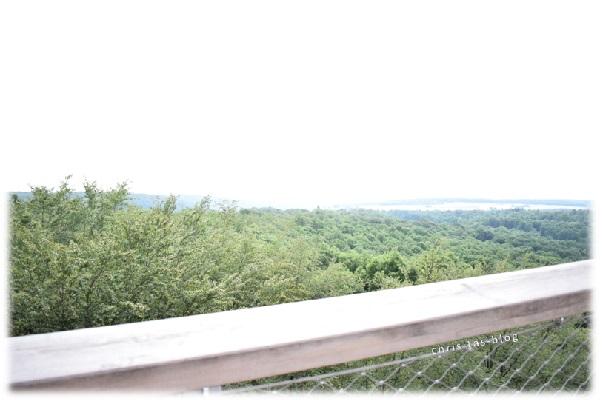 Blick auf die Wälder