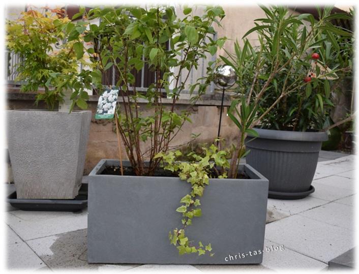 bepflanzter Kübel von Pflanzwelt