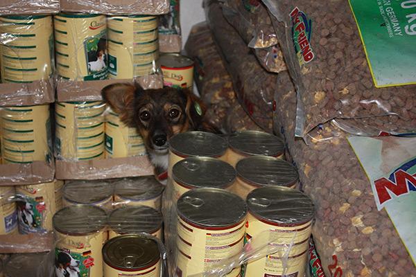 Futterspenden kommen in Rumänien an