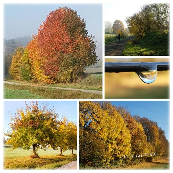 herbstimpressionen - Farbenspiel der Natur