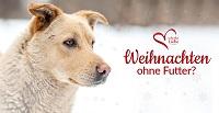 Weihnachten an Hunde denken