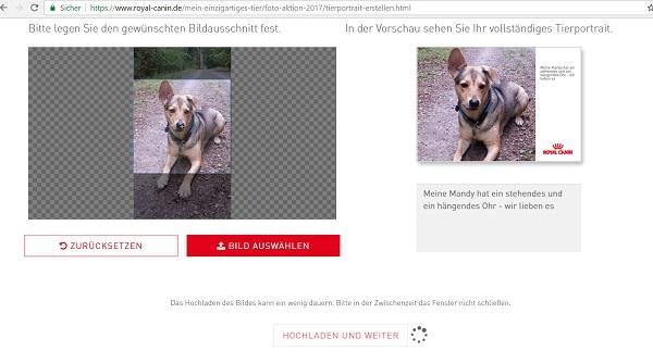 Screenshot Hundeshooting Foto hochladen