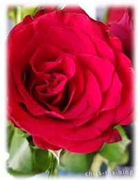 Valentinstag gab es rote Rosen