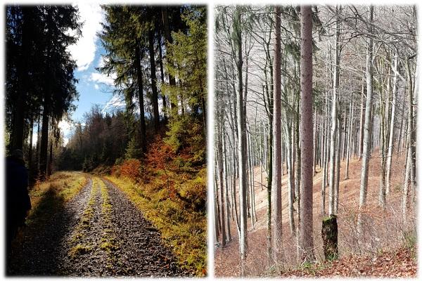 Wanderweg zum Schwarzen Grat in Adelegg Allgäu von Kreuztal-Eisenbach aus