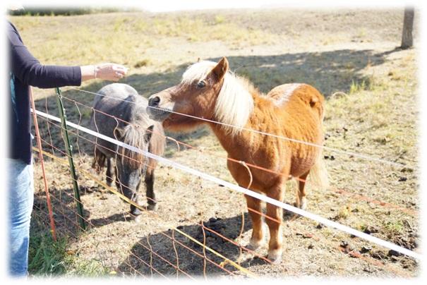 Ponys beim Kneipp Werk Ochsenfurt