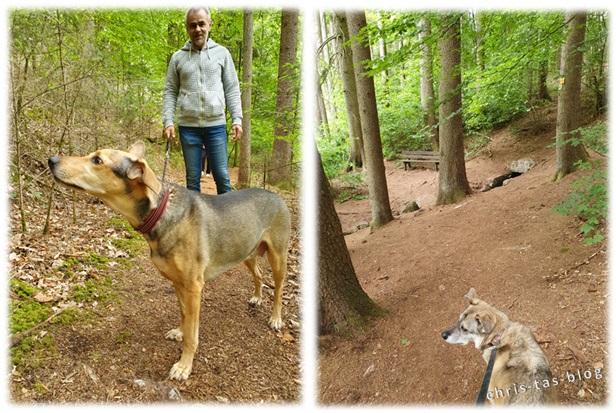 Weiter durch den Wald in Baudenbach
