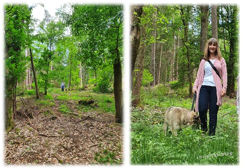 Durch den Wald in Baudenbach zur Gesundheitsquelle