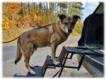 Friedrischs Hundetreppe – perfekter Hundebedarf bei Mobilitätsproblemen