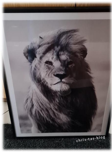 Lion Löwe Poster von Dear Sam