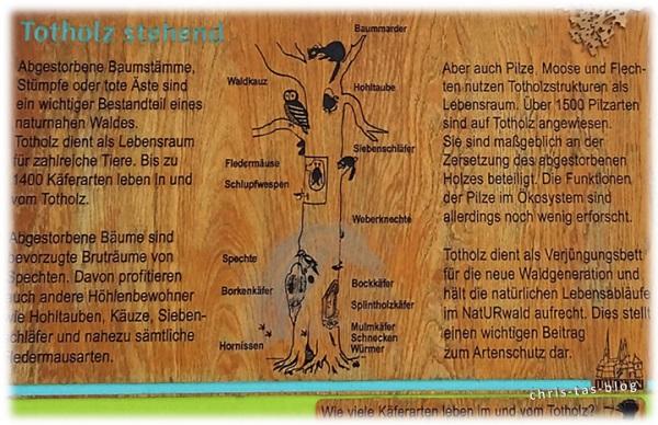 Infotafel Totholz NatURwaldweg Wolfsee