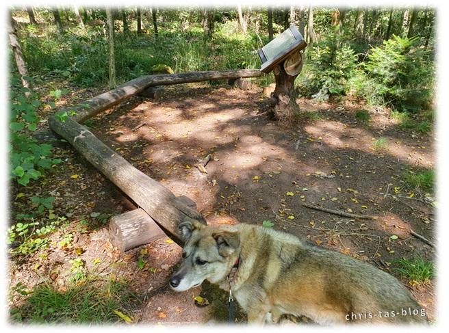 Buch im Wald Wolfsee NatURwaldweg