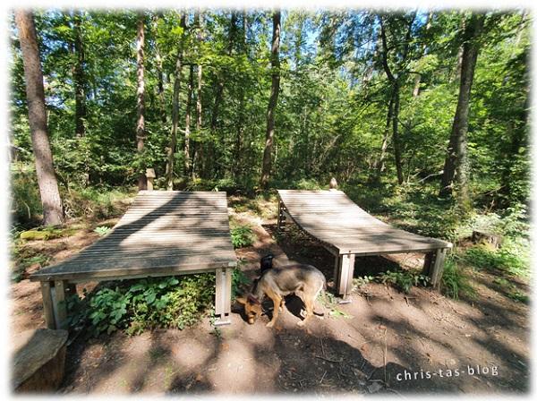 gigantische Holzliegen im Wald NatURwaldweg Wolfsee