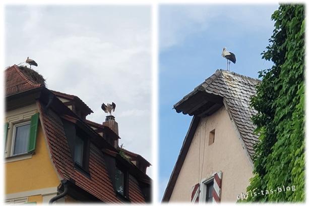 Storchen-Nester in Uehlfeld