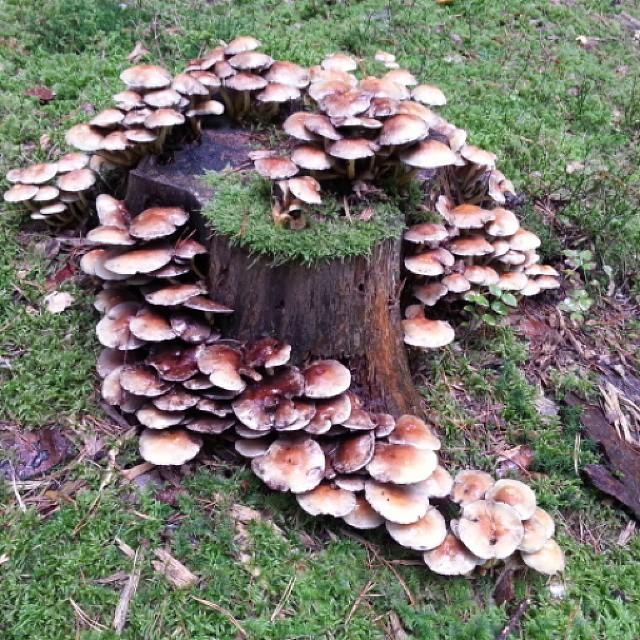 #nature #naturephotos #instalike #instaphoto #like4like #naturepic #nature #pilz #photooftheday #like4like #mushroom