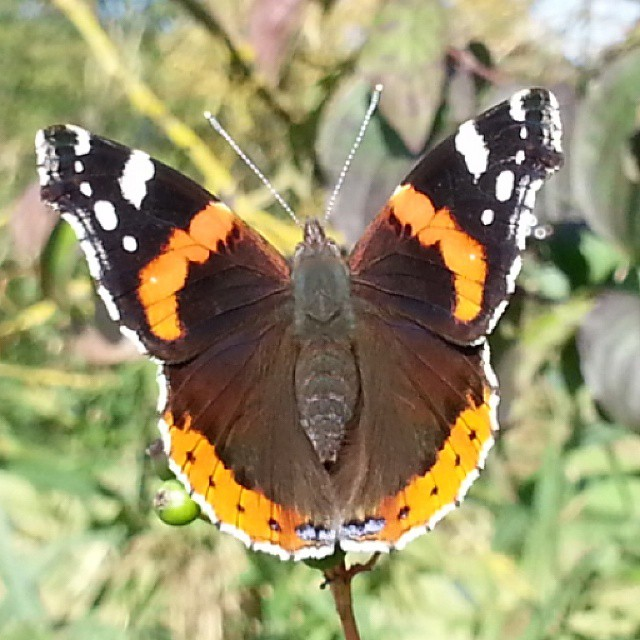 Wow... wie toll #instalike #instaphoto #like4like #naturepic #nature # Schmetterling #butterfly