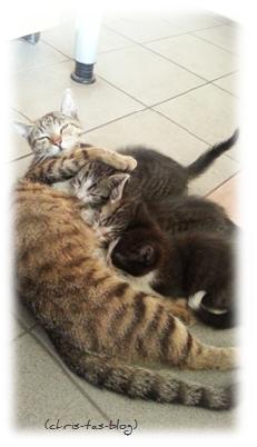 Babykatzen im Büro