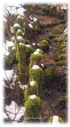 Moos im Wald - am Bachlauf entlang