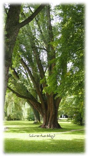 Baum am Bleichweiher