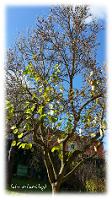 Baum fast nackt - Die Blätter sind gefallen