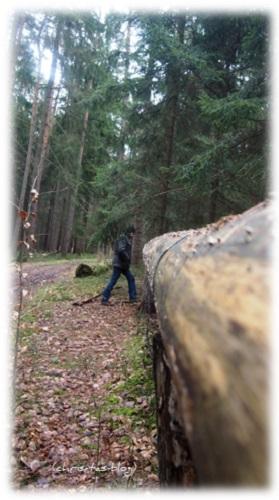 Baumtelefon im Wald