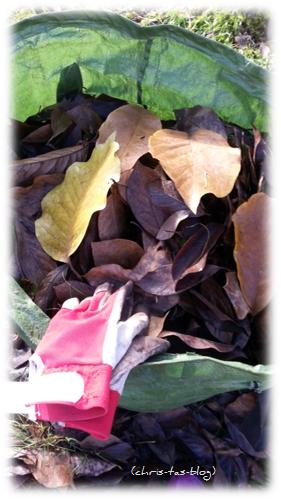 Blätter im Garten