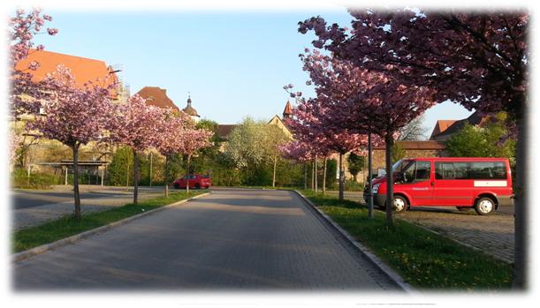 Blütenpracht am Großparkplatz Neustadt Aisch