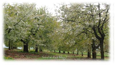Blütenpracht am Walberla