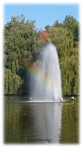 Bleichweiher - Regenbogen