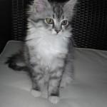 Unser neues Testmitglied: Mia