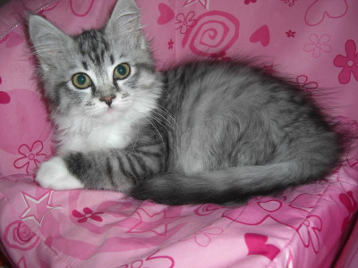 Unser Main Coon Mix Mia