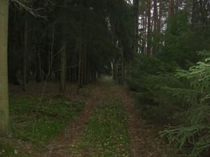 Waldweg...