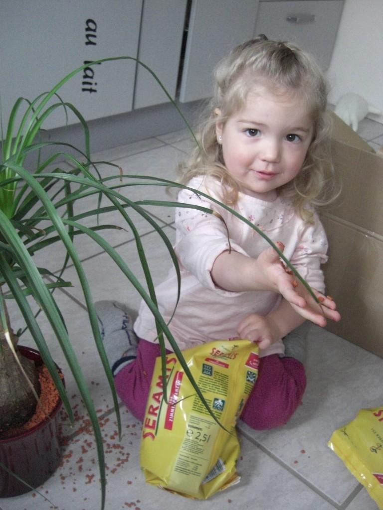 Große Hilfe mit kleinen Händen: Virginia beim Pflanzen umtopfen