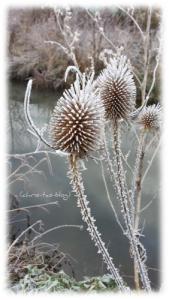 Diesteln im Frost