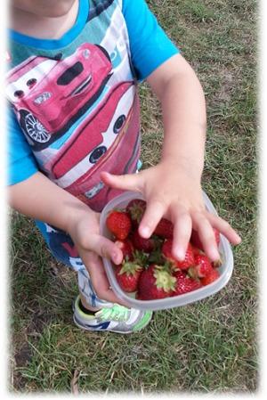 Erdbeeren selberpflücken Dottenheim