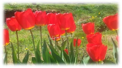 Frühlings-Blumen