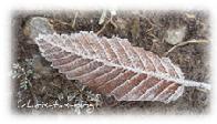 Frost in Mittelfranken