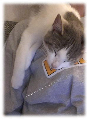 Fundkatze Dali beim Schlafen