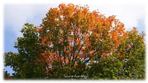 leuchtendes Laub an den Bäumen